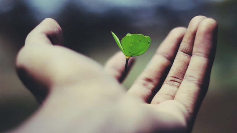 floating green leaf plant on person's hand